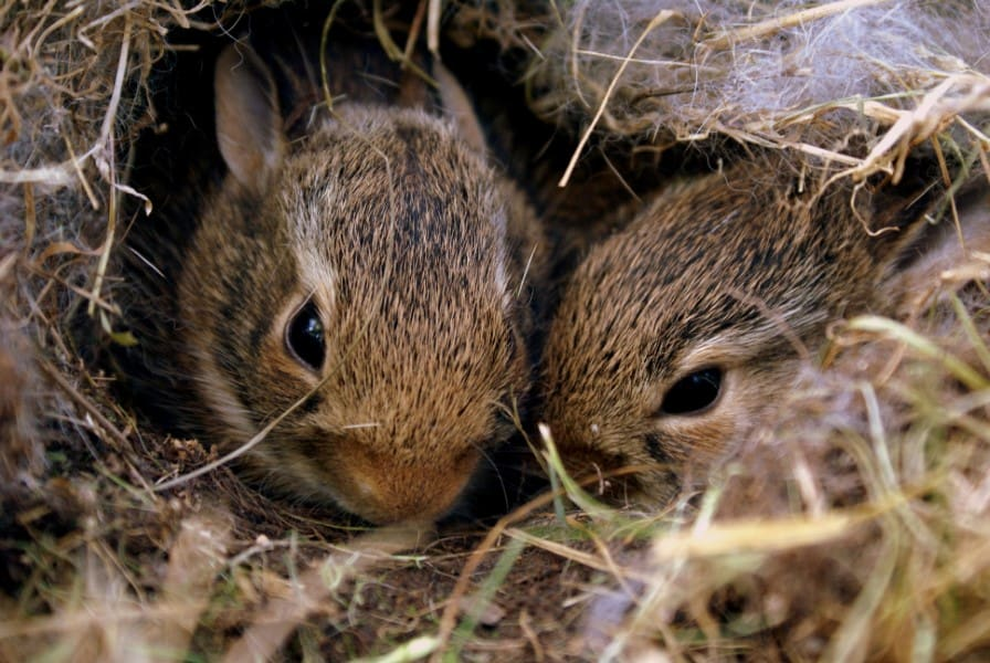 two squirrels nesting