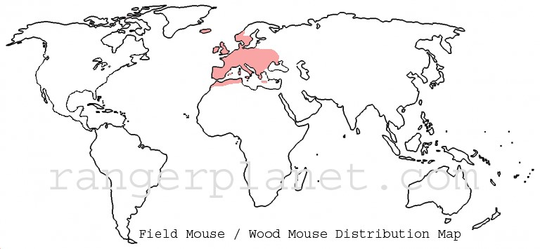 field mouse - wood mouse - distribution map