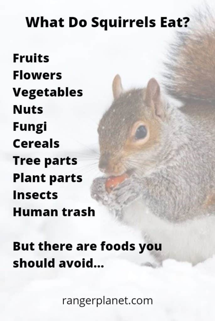 What Do Squirrels Eat The Complete