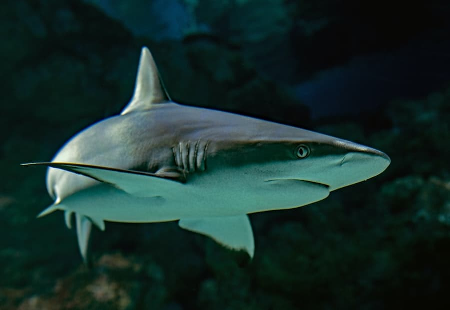 side image of a shark under water